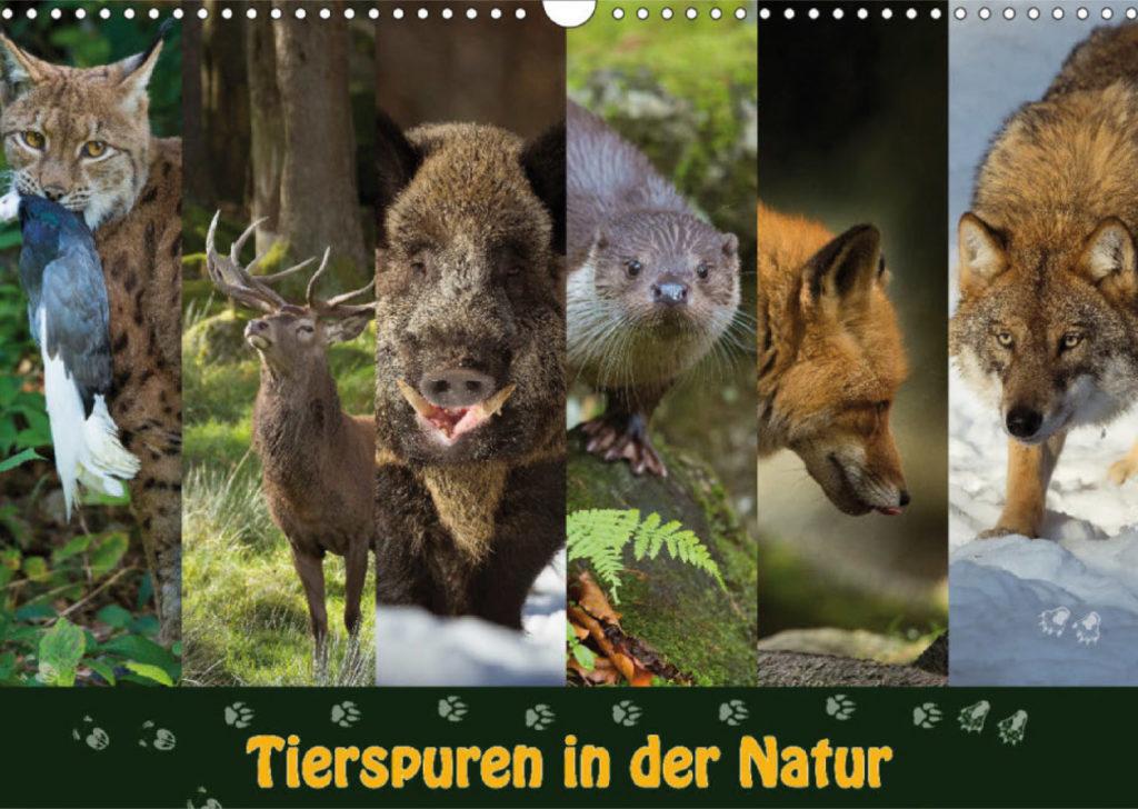 """Titelblatt Kalender """"Tierspuren in der Natur"""""""