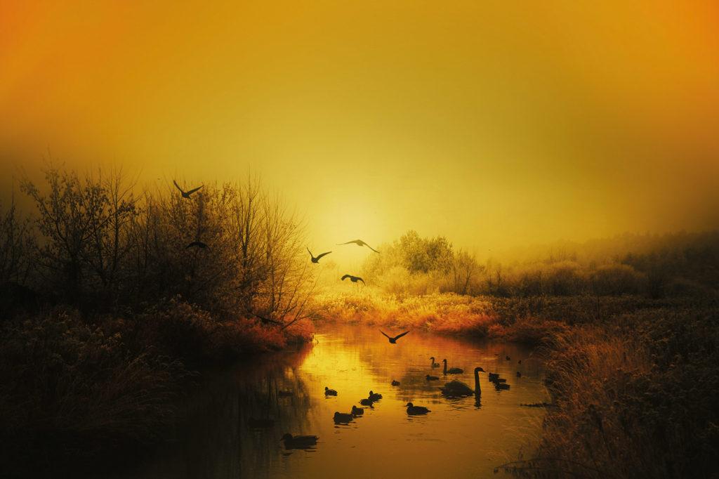 Flusslandschaft in Abendstimmung mit Wasservögeln