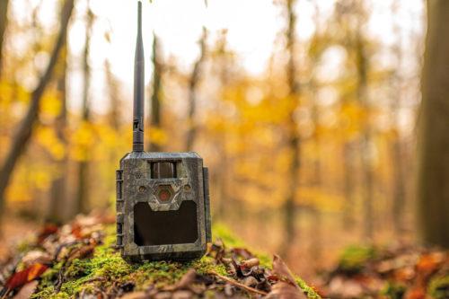 Wildkamera im Wald
